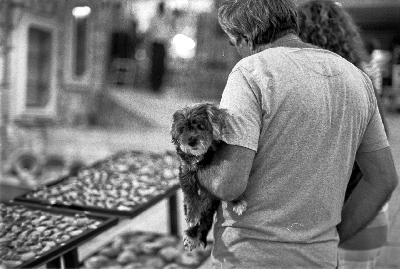 Cretan dog