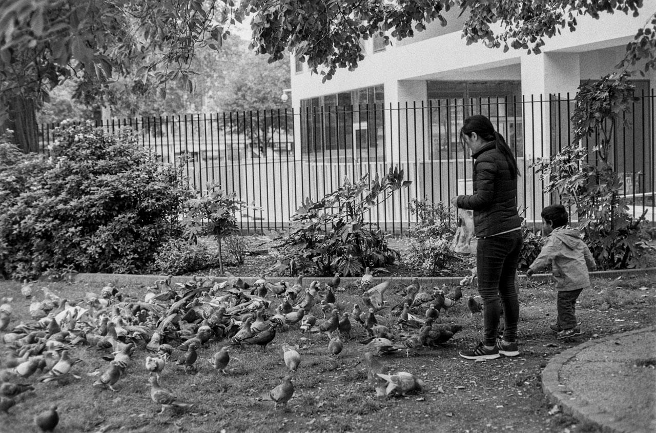 Feed them pigeons